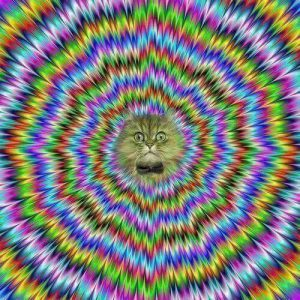 trippycat